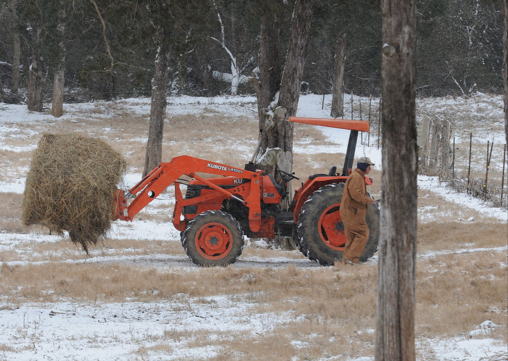 Description of . Cattle farmer Wayne Lynn, of Slygo,  walks to close a pasture gate as he delivers a roll of hay for his 22-head of cattle midday Tuesday Jan. 28, 2014 in Dade County. (AP Photo/Chattanooga Times Free Press, Tim Barber)