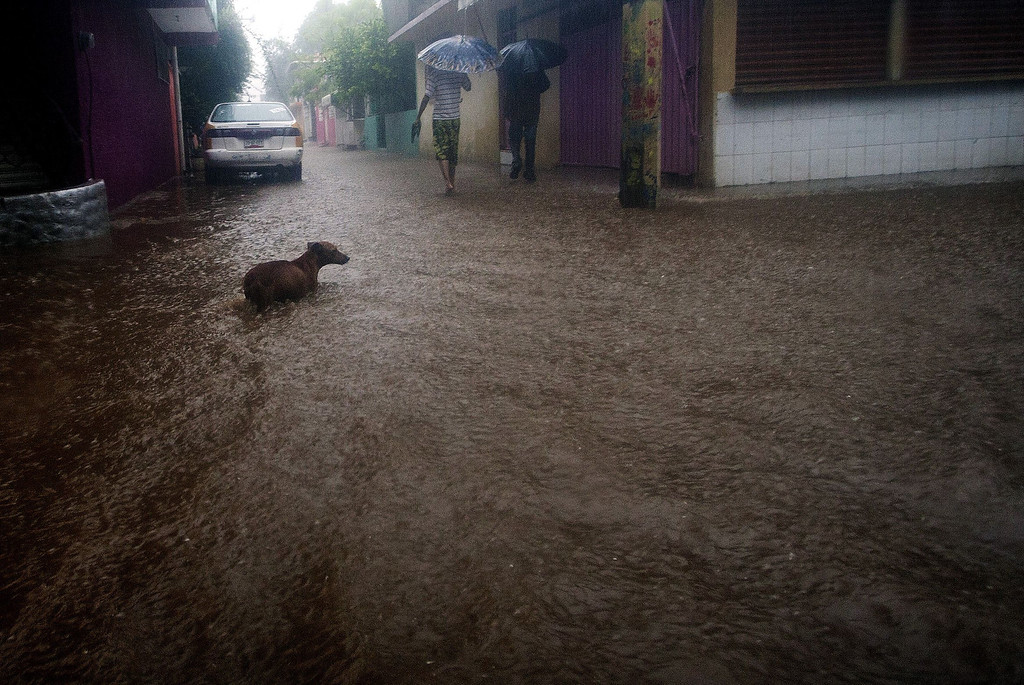 Description of . TOPSHOTS A dog wades in a flooded street in Acapulco, Guerrero state, Mexico following tropical storm Manuel which landed in the Pacifiic coast of Mexico on September 15, 2013. Hurricane Ingrid and Tropical Storm Manuel triggered rain, landslides and floods on Mexico's east and west coasts Sunday, killing at least 20 people and forcing thousands to evacuate before landfall. Manuel was weakening after making landfall near the Colima state town of Manzanillo, packing top winds of almost 50 miles (85 kilometers) per hour as it moved northwest, the US hurricane center said.   Pedro PARDO/AFP/Getty Images
