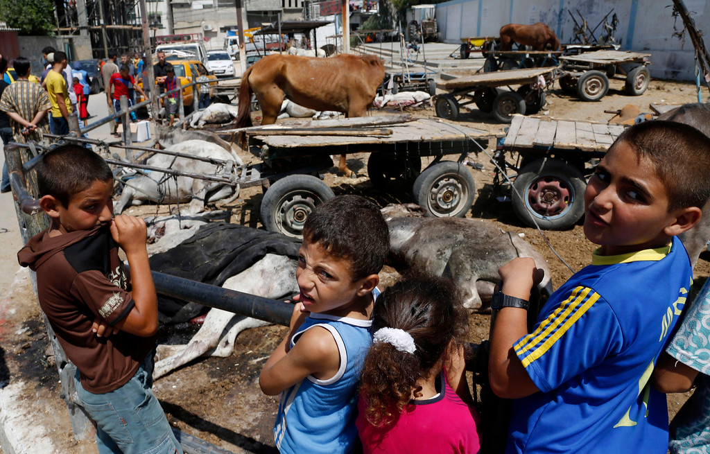 Description of . Palestinians look at animals killed and wounded by an Israeli strike earlier at the Abu Hussein U.N. school, partly seen in the background, in the Jebaliya refugee camp in the northern Gaza Strip on Wednesday, July 30, 2014. (AP Photo/Hatem Moussa)