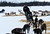 Ken Anderson departs the Finger Lake checkpoint in Alaska during the Iditarod Trail Sled Dog Race on Monday, March 4, 2013. (AP Photo/The Anchorage Daily News, Bill Roth)