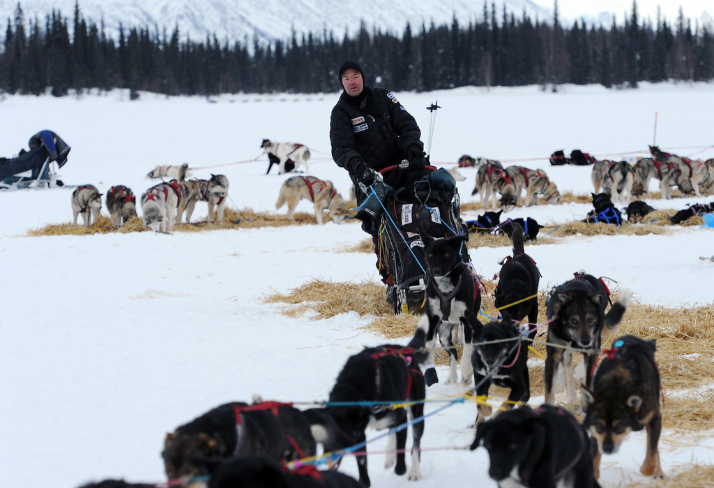 Description of . Ken Anderson departs the Finger Lake checkpoint in Alaska during the Iditarod Trail Sled Dog Race on Monday, March 4, 2013. (AP Photo/The Anchorage Daily News, Bill Roth)