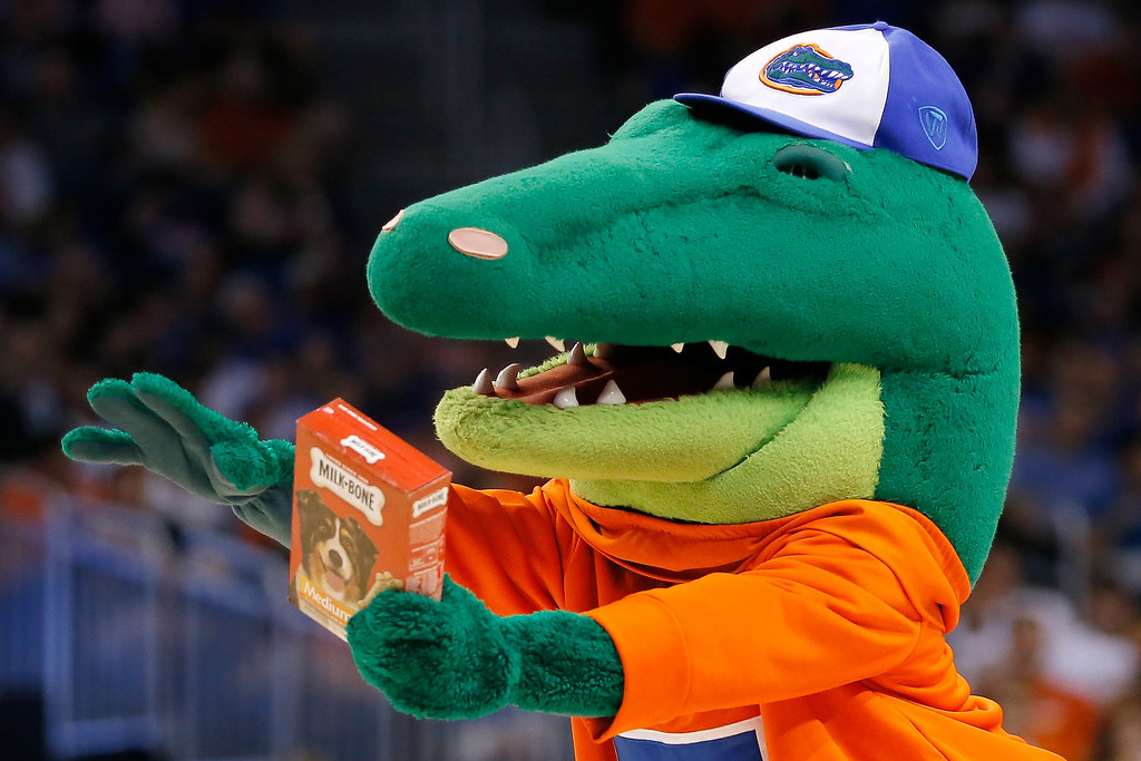 Description of . The Florida Gators mascot holds a pack of Milk-Bone dog treats for the Albany Great Danes mascot during the second round of the 2014 NCAA Men's Basketball Tournament at Amway Center on March 20, 2014 in Orlando, Florida.  (Photo by Kevin C. Cox/Getty Images)