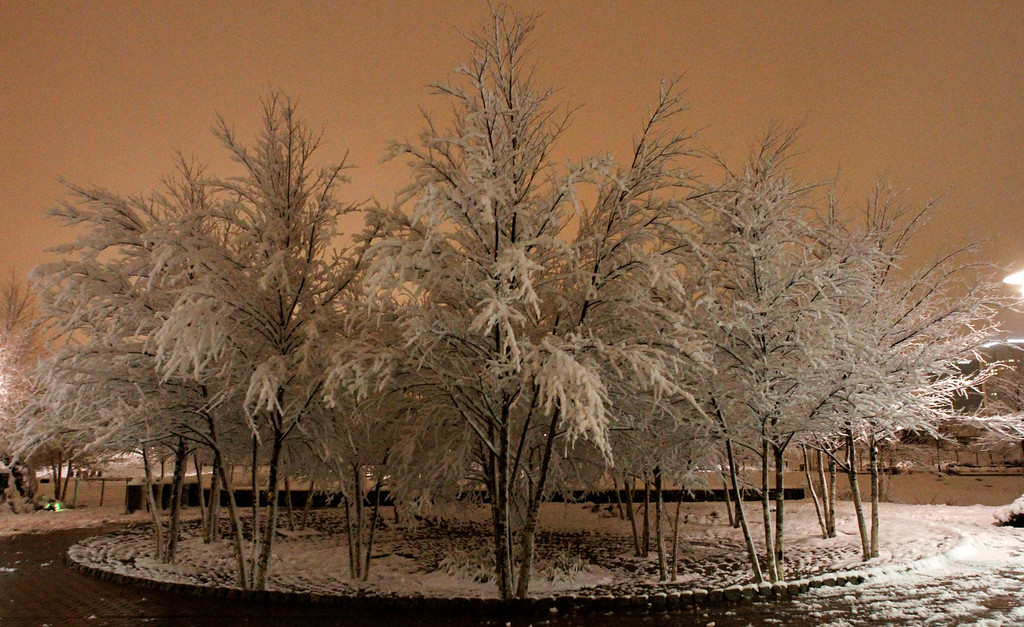 Description of . Ice covers trees in Railroad Park as a winter storm drops several inches of snow and ice on Thursday, Feb. 13, 2014, in Birmingham, Ala. (AP Photo/Butch Dill)