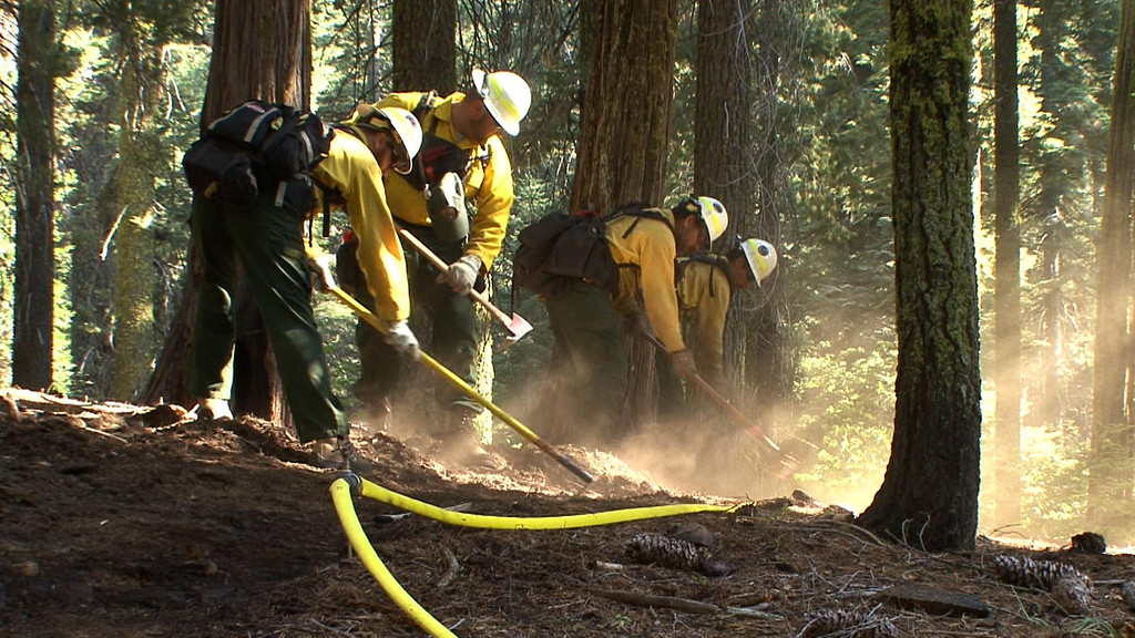 Description of . This photo obtained August 26, 2013 courtesy of the US Forest Service, shows NPS crews as they dig hand line along a sprinkler hose as part of a multi-pronged approach to protecting the Giant Sequoias against the Rim fire. A wildfire raging on the northern tip of California's Yosemite National Park threatens a world-famous site of natural beauty and the reservoir that provides San Francisco with drinking water. AFP PHOTO / US FOREST SERVICE ==HO/AFP/Getty Images