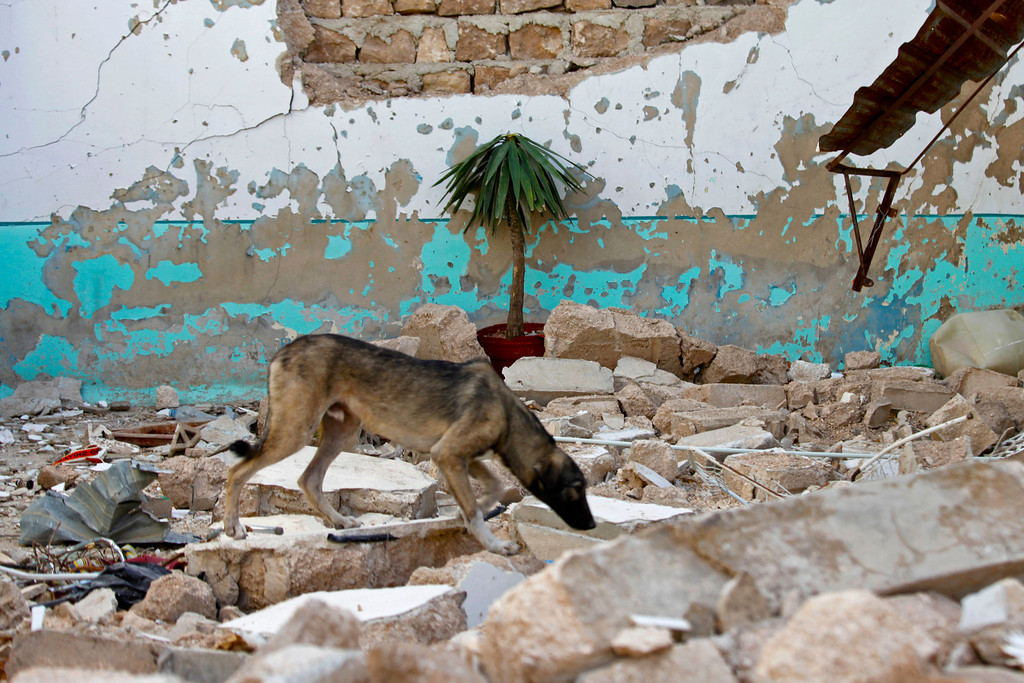Description of . A dog searches for food at a destroyed house in Azaz, in northern Syria near the border with Turkey, October 8, 2012. REUTERS/Zain Karam
