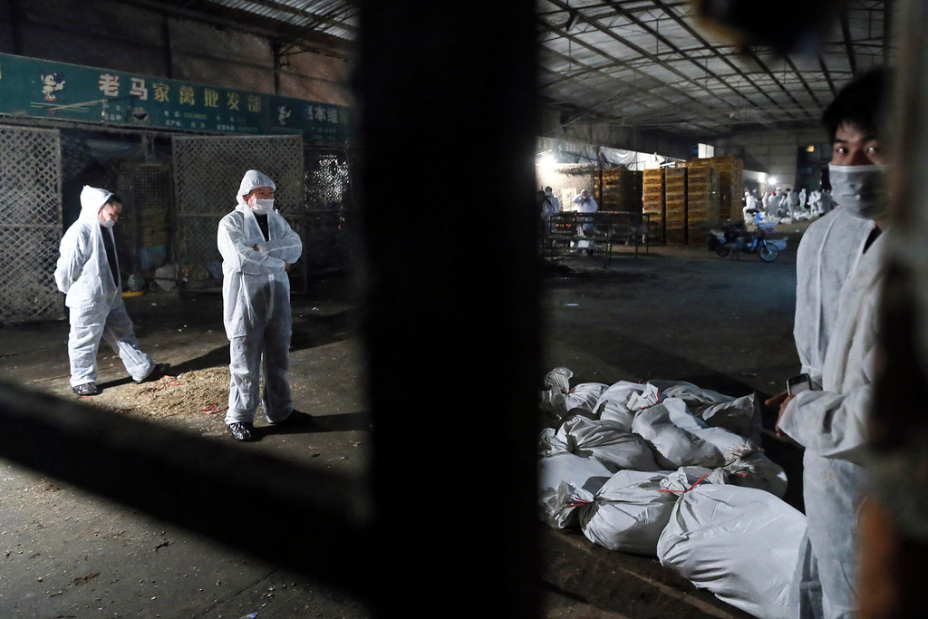 Description of . Technicians wearing protection suits begin to cull poultry at Huhuai poultry wholesale market, where the H7N9 bird flu virus was detected in pigeon samples, in Shanghai April 5, 2013. Chinese authorities were slaughtering birds at this poultry market in the financial hub Shanghai as the death toll from a new strain of bird flu mounted to six on Friday, spreading concern overseas and sparking a sell-off on Hong Kong's share market. State news agency Xinhua said the Huhuai market for live birds in Shanghai had been shut down and birds were being culled after authorities detected the H7N9 virus from samples of pigeons in the market. According to Xinhua News Agency, east China's Zhejiang Province on Friday morning reported that a man has died from the H7N9 bird flu, bringing the death toll from the new deadly strain to six in the country. REUTERS/Stringer