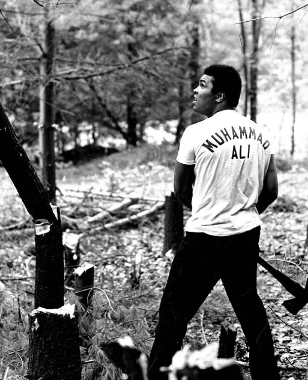 Description of . Muhammad Ali Often chops down as many trees as he can in 15 minutes. 1972. Credit: The Denver Post