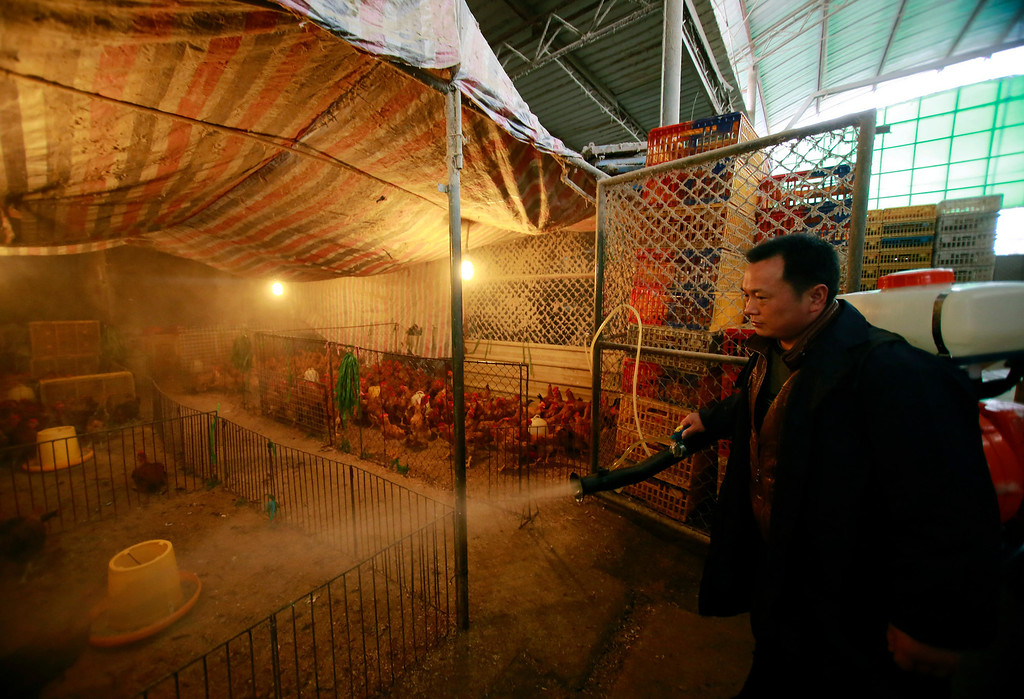 Description of . A worker spays disinfectant liquid on to chicken cages at a wholesale market on Thursday, April 4, 2013, in Shanghai, China. In a worrisome sign, a bird flu in China appears to have mutated so that it can spread to other animals, raising the potential for a bigger threat to people, scientists said Wednesday. (AP Photo)