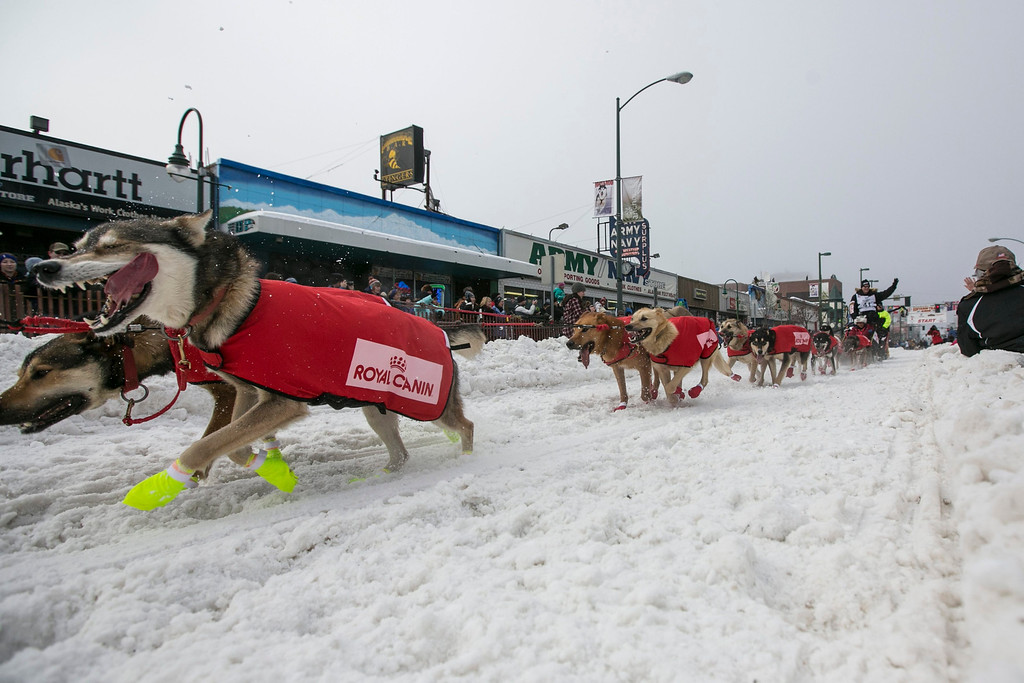 Description of . Ed Stielstra's team charges out of the start gate on 4th Avenue during the ceremonial start to the Iditarod dog sled race in downtown Anchorage, Alaska  March 2, 2013.   REUTERS/Nathaniel Wilder