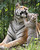 A Bengal tiger cub intimates with its mother at a wild zoo in Jinan, capital of east China's Shandong Province. Four two-month-old Bengal tiger cubs debut with their mother at the zoo on Monday. The eight-year-old Bengal tiger mother has given birth to 12 babies, nine of which are white tigers.   (AP Photo/Xinhua, Lu Chuanquan)