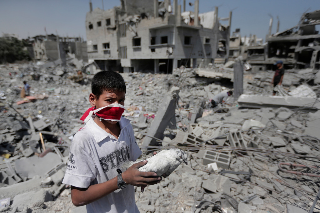 Description of . A Palestinian holds a pet bird he salvaged from the rubble of a destroyed house, in the heavily bombed town of Beit Hanoun, Gaza Strip, close to the Israeli border, Friday, Aug. 1, 2014. A three-day Gaza cease-fire that began Friday quickly unraveled, with Israel and Hamas accusing each other of violating the truce. (AP Photo/Lefteris Pitarakis)