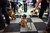 A pug is told to remain seated on the first day of Crufts dog show at the NEC on March 7, 2013 in Birmingham, England. The four-day show features over 25,000 dogs, with competitors traveling from 41 countries to take part. Crufts, which was first held in1891, sees thousands of dogs vie for the coveted title of 'Best in Show'.  (Photo by Oli Scarff/Getty Images)