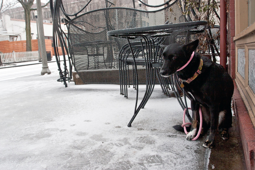 Description of . A dog sits on an icy sidewalk in Decatur, ga. on Feb. 12, 2014. Icy and snowy road conditions caused some businesses and schools to shut down in the greater metro Atlanta region. (AP Photo/ Ron Harris)