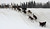 John Baker's dogs cross an island in the Yukon River as they near the Iditarod checkpoint in  Anvik, Alaska on Friday, March 8, 2013,  during the Iditarod Trail Sled Dog Race. (AP Photo/Anchorage Daily News, Bill Roth)