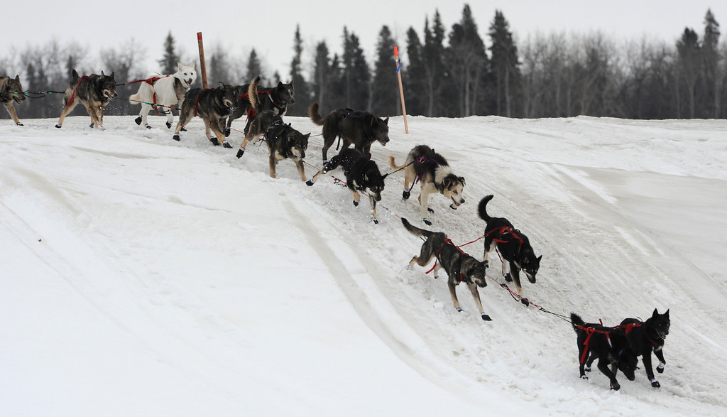 Description of . John Baker's dogs cross an island in the Yukon River as they near the Iditarod checkpoint in  Anvik, Alaska on Friday, March 8, 2013,  during the Iditarod Trail Sled Dog Race. (AP Photo/Anchorage Daily News, Bill Roth)