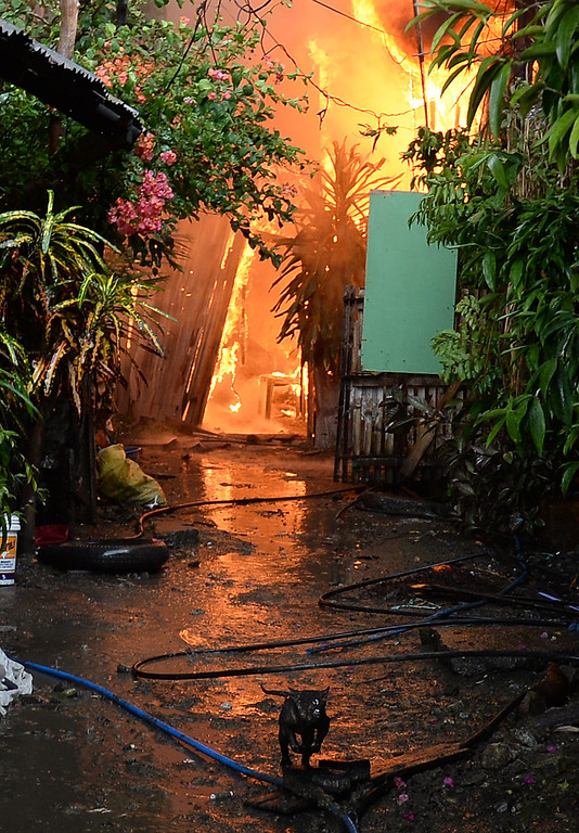 Description of . A partially burned pet cat (front) runs away from burning houses during a fire fight between government forces and Muslim rebels as stand-off entered its fourth day in Zamboanga City on the southern island of Mindanao on September 12, 2013.  AFP PHOTO/TED ALJIBE/AFP/Getty Images