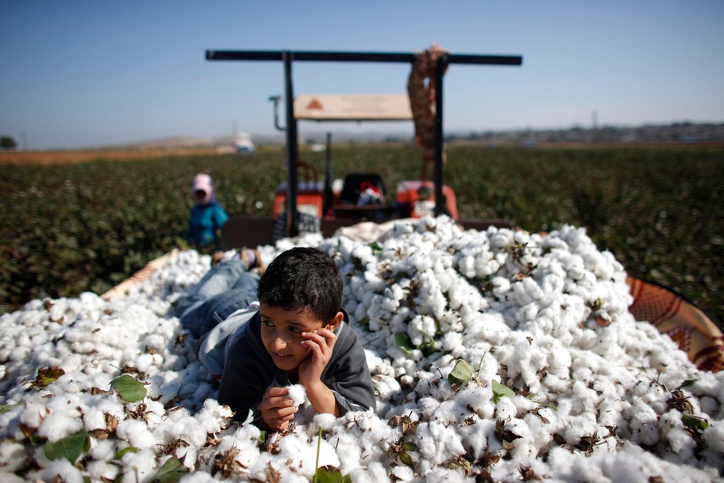 Description of . Moayed, a 9-year old Syrian refugee boy, lies over cotton clumps as the other Syrians work in a cotton field in the village of Bukulmez on the Turkish-Syrian border, in Hatay province, November 3, 2012. Despite the conflict on the Syrian side of the border, cotton harvest is still underway in Turkey's southern border province of Hatay. In early October, the Turkish military launched a retaliatory strike on Syria after a mortar bomb fired from Syrian soil landed in the countryside in Hatay. Some Syrian refugees work at cotton fields together with Turkish villagers in the border region as cotton pickers. Picture taken November 3, 2012. REUTERS/Murad Sezer