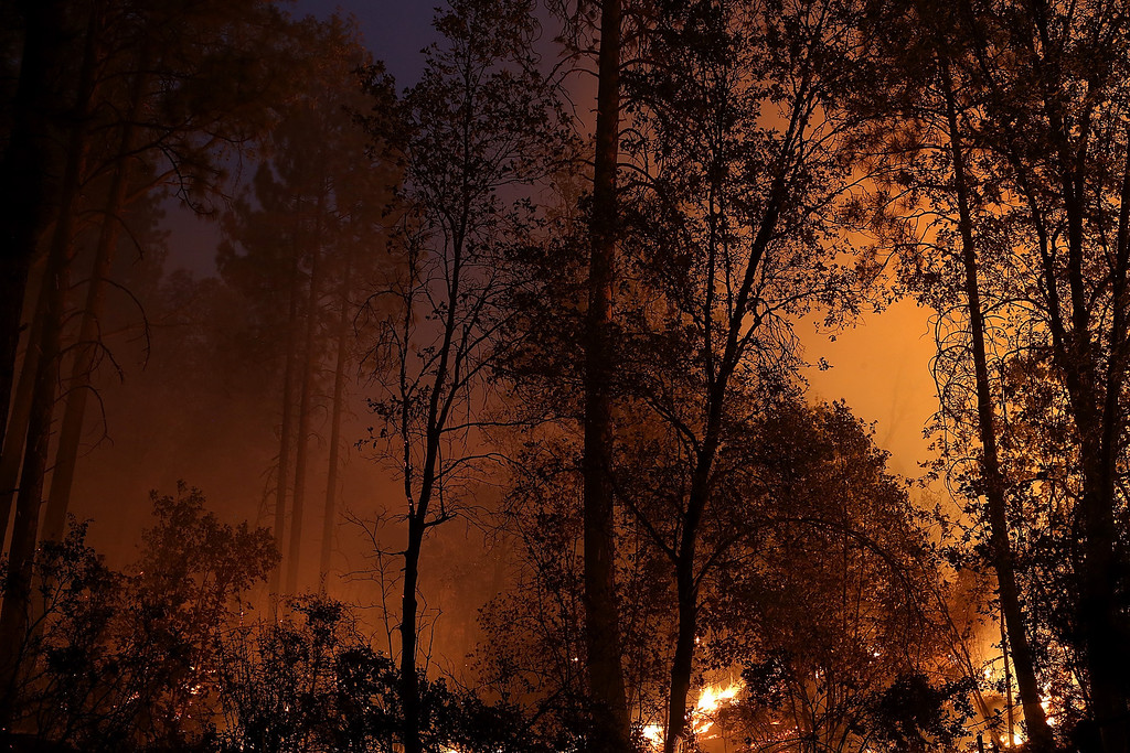 Description of . GROVELAND, CA - AUGUST 21:  A back fire burns in trees during the Rim Fire on August 21, 2013 in Groveland, California. The Rim Fire continues to burn out of control and threatens 2,500 homes outside of Yosemite National Park. Over 400 firefighters are battling the blaze that is only 5 percent contained.  (Photo by Justin Sullivan/Getty Images)