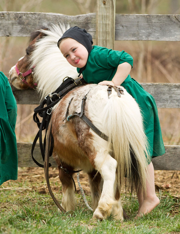 Description of . An Amish girl attempts to mount a miniature horse near the family farm in Bergholz, Ohio on Tuesday, April 9, 2013.  (AP Photo/Scott R. Galvin)
