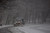 A plow truck clears a road in a snow-shrouded park on March 8, 2013 in the Brooklyn borough of New York City. As a week-old storm slowly moves out to sea, the New York City area is expecting 1 to 3 inches of snow with more in areas north and west of the city. The storm has caused flight delays at area airports and numerous schools have delayed start times.  (Photo by Spencer Platt/Getty Images)