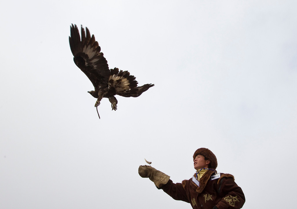 Description of . A Kazakh hunter watches as his tamed golden eagle is released into the air during an annual hunting competition in Chengelsy Gorge, some 150 km (93 miles) east of Almaty February 22, 2013. Picture taken February 22, 2013.  REUTERS/Shamil Zhumatov