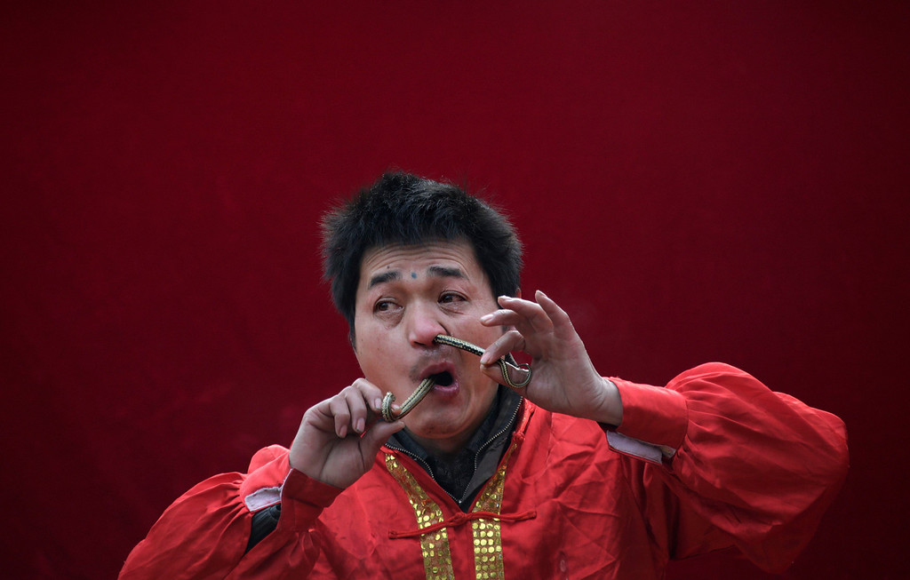 Description of . A performer inserts a live snake through his nose and mouth during a performance at the Ditan Temple Fair celebrating the Chinese Lunar New Year in Beijing February 11, 2013. The Lunar New Year, or Spring Festival, began on February 10 and marked the start of the Year of the Snake, according to the Chinese zodiac.REUTERS/Petar Kujundzic