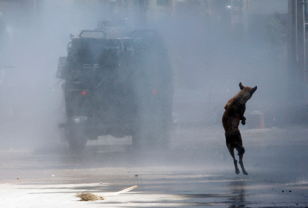 Description of . A dog jumps as riot policemen use a water cannon on student protesters during a protest against the government to demand changes in the public state education in Santiago January 19, 2012. Chilean students have been protesting against what they say is the profiteering in the state education system. REUTERS/Victor Ruiz Caballero