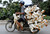 A man transports ducks on a motorcycle to a market in Nam Ha province, outside Hanoi May 31, 2012. REUTERS/Kham