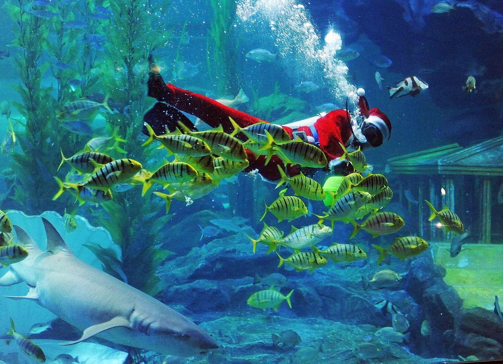 Description of . A diver dressed in a Santa Claus costume swims with fish at Qingdao Underwater World on December 24, 2013 in Qingdao, China.  (Photo by ChinaFotoPress/ChinaFotoPress via Getty Images)