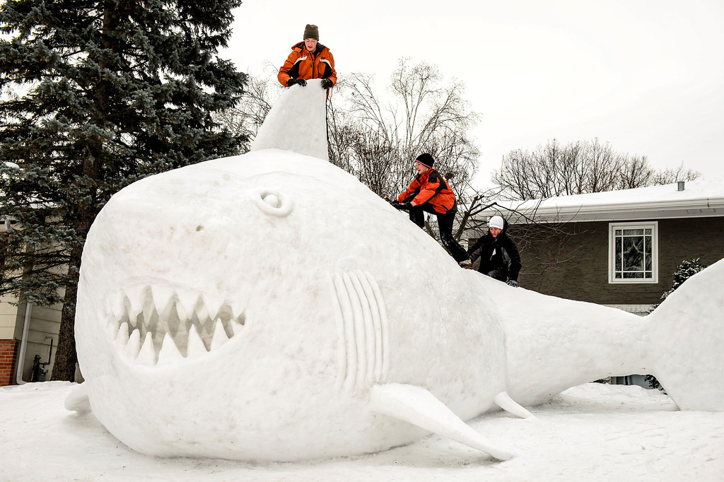 Description of . Three brothers, from left, Trevor, Connor, and Austin Bartz built this 16 foot high snow shark in the front yard of their New Brighton, Minn. home, Wednesday, Jan. 1, 2014.  It took them around 95 hours of work and they gathered the snow from houses in their neighborhood. (AP Photo/Star Tribune, Glen Stubbe)
