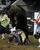 DENVER, CO- JANUARY 27:  Cody Rostockyj, of Hillsboro, Texas,  gets thrown off a bull during the Bull Riding competition of the Pro Rodeo.