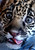 Baby jaguar Spotti is seen at the Attica Zoological Park east of Athens. The jaguar, weighed 4.5 kilograms (9.9 pounds) at the time of the photo, was born at a zoo in Germany. (AP Photo/Thanassis Stavrakis)