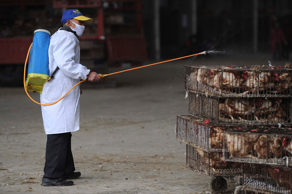 Description of . An employee wearing a protection suit sprays disinfectant on chickens at a poultry market in Hefei, Anhui province April 5, 2013. Chinese authorities were slaughtering birds at a poultry market in the financial hub Shanghai as the death toll from a new strain of bird flu mounted to six on Friday, spreading concern overseas and sparking a sell-off on Hong Kong's share market. According to Xinhua News Agency, east China's Zhejiang Province on Friday morning reported that a man has died from the H7N9 bird flu, bringing the death toll from the new deadly strain to six in the country. REUTERS/Stringer