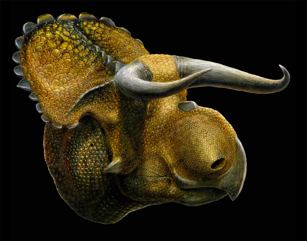 Description of . Courtesy | Lukas Panzann  An artist�s version of the newly named horned dinosaur Nasutoceratops titusi discovered in Grand Staircase-Escalante National Monument in southern Utah.
