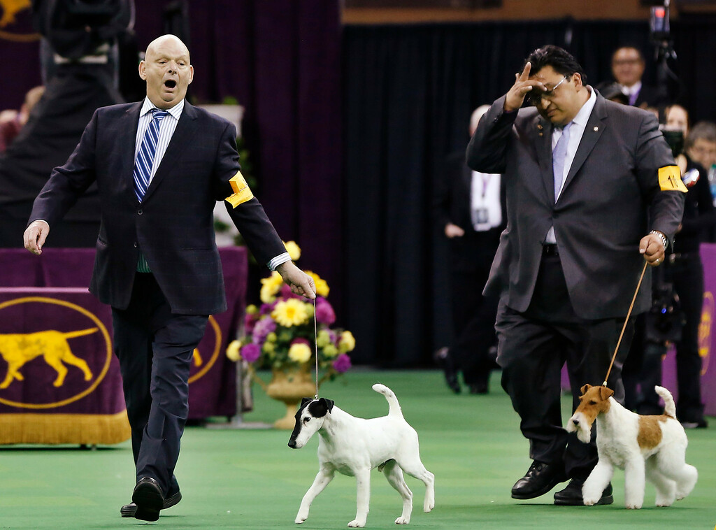 Description of . Handler Eddie Boyes (L) reacts after Adam, a Smooth Fox Terrier, wins the Terrier Group at the 137th Westminster Kennel Club Dog Show at Madison Square Garden in New York, February 12, 2013. REUTERS/Shannon Stapleton