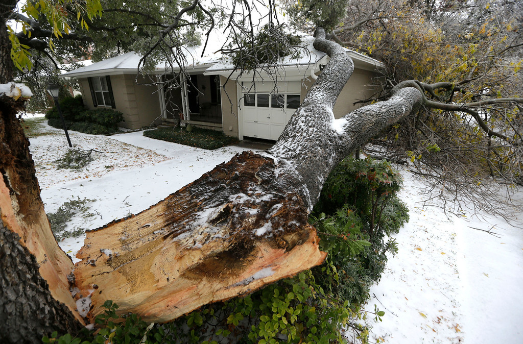 Description of . A tree felled by ice rests near a house Friday, Dec. 6, 2013, in Richardson, Texas.  Winter storm and ice warnings are in effect through much of today for parts of six states in the Midwest, including Texas, Missouri, Illinois and Indiana. An ice storm in North Texas has knocked out power to more than a quarter of a million homes and business, canceled almost 1,000 flights and contributed to a fatal wreck. The National Weather Service issued a winter storm warning for the Dallas area until Friday night. (AP Photo/LM Otero)