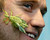 Keeper Jeff Lambert smiles as two leaf insects get close during a photo call for the annual stock take at London Zoo, Thursday, Jan. 3, 2013. More than 17,500 animals including birds, fish, mammals, reptiles and amphibians are counted in the annual stock take at the zoo. (AP Photo/Kirsty Wigglesworth)