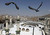 Pigeons fly over the Grand Mosque at Friday prayers during the annual haj pilgrimage in the holy city of Mecca October 19, 2012. The Arafat Day, when millions of Muslim pilgrims will stand in prayer on the mount of Arafat near Mecca at the peak of the annual pilgrimage, will be held on October 25 and Eid al-Adha or the feast of sacrifice will be held on October 26, according to an official announcement on Tuesday. REUTERS/Amr Abdallah Dalsh