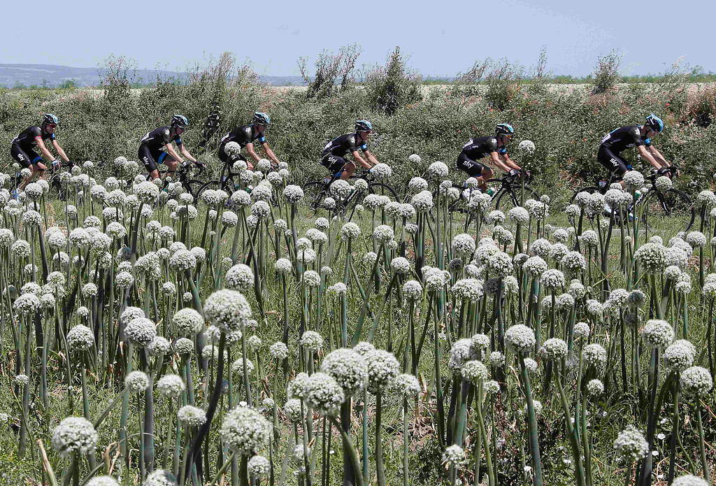 Description of . Team Sky rider Christopher Froome of Britain (R) leads his team mates as they cycle past an onion field during the 195 km eight stage of the centenary Tour de France cycling race from Castres to Ax 3 Domaines July 6, 2013.      REUTERS/Jacky Naegelen
