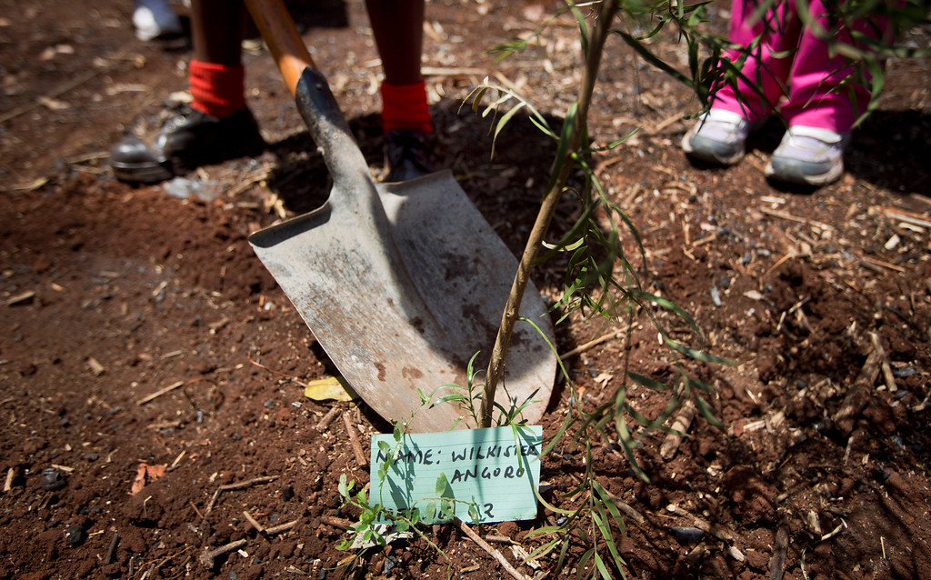 Description of . Children plant a tree in memory of Westgate victim Wilkister Vizengwa Angoro, at a memorial service and tree-planting marking the one-month anniversary of the the Sept. 21 Westgate Mall terrorist attack, in Karura Forest in Nairobi, Kenya Monday, Oct. 21, 2013. (AP Photo/Ben Curtis)