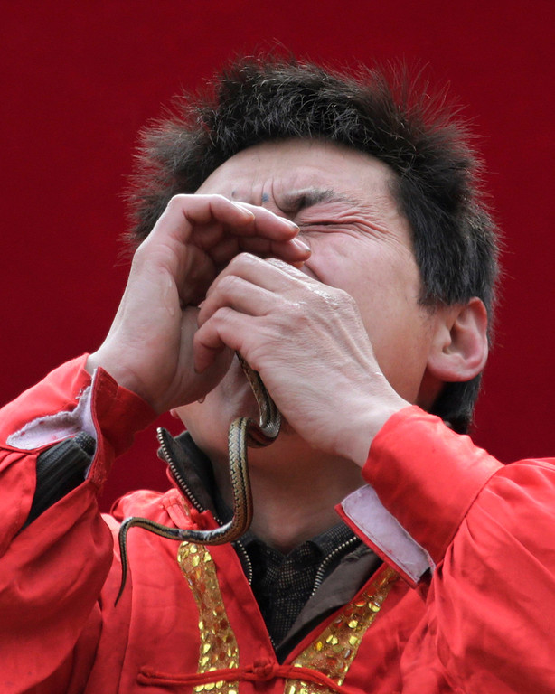 Description of . A performer inserts a live snake through his nose and mouth during a performance at the Ditan Temple Fair celebrating the Chinese Lunar New Year in Beijing February 11, 2013.REUTERS/Petar Kujundzic