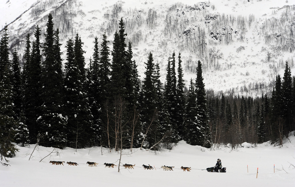 Description of . Scott Janssen heads down the trail after departing the Finger Lake checkpoint in Alaska during the Iditarod Trail Sled Dog Race on Monday, March 4, 2013. (AP Photo/The Anchorage Daily News, Bill Roth)