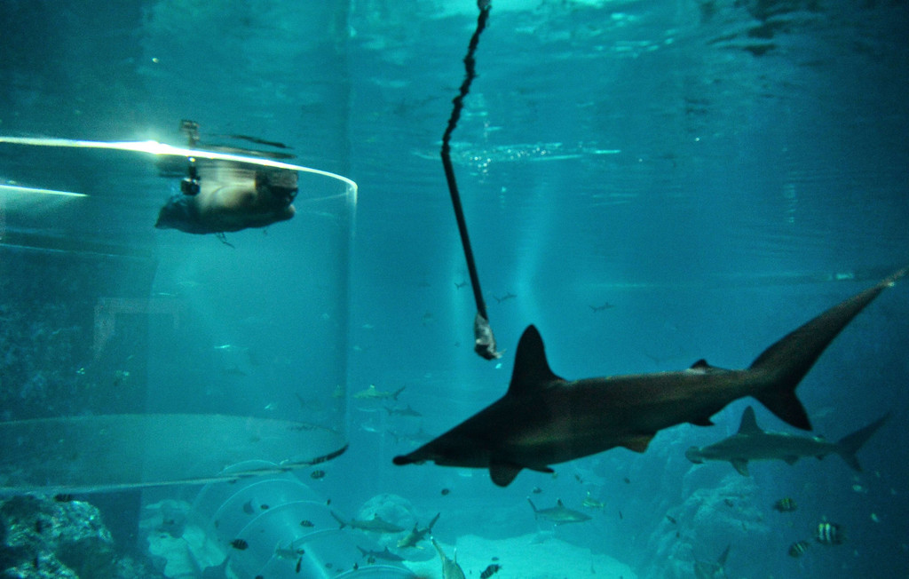Description of . Australian motivational speaker, Nick Vujicic (top L), who was born without limbs, swims in a shark habitat while protected within a customised acrylic enclosure at Marine Life Park, Resort World Sentosa in Singapore on September 5, 2013. Vujicic is in Singapore for a one-day event where he will be speaking to a 5,000 strong audience. ROSLAN RAHMAN/AFP/Getty Images