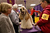Stacy Dohmeier (R), blow dries Tucker, an A.S.C.O.B Cocker Spaniel at the 137th Westminster Kennel Club Dog Show on February 12, 2013 in New York City. Best of breed dogs were to compete for Best in Show at Madison Square Garden Tuesday night. A total of 2,721 dogs from 187 breeds and varieties competed in the event, hailed by organizers as the second oldest sporting competition in America, after the Kentucky Derby. (Photo by John Moore/Getty Images)