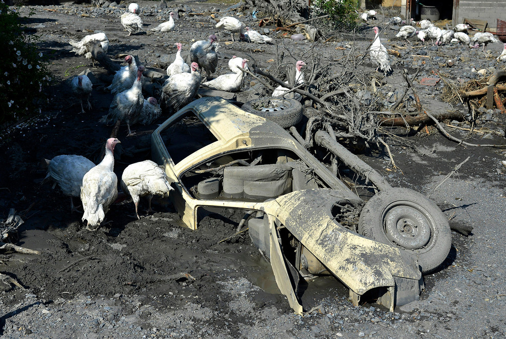 Description of . Turkeys move around a a car buried in mud and rubble after a landslide at the village of Topcic Polje, near the Bosnian town of Zenica, 90 kilometers north of Sarajevo, Bosnia-Herzegovina, Tuesday May 20, 2014. (AP Photo/Sulejman Omerbasic)