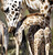 A baby Giraffe stands next to its mother in the zoo in Hanover.  (NIGEL TREBLIN/AFP/Getty Images)