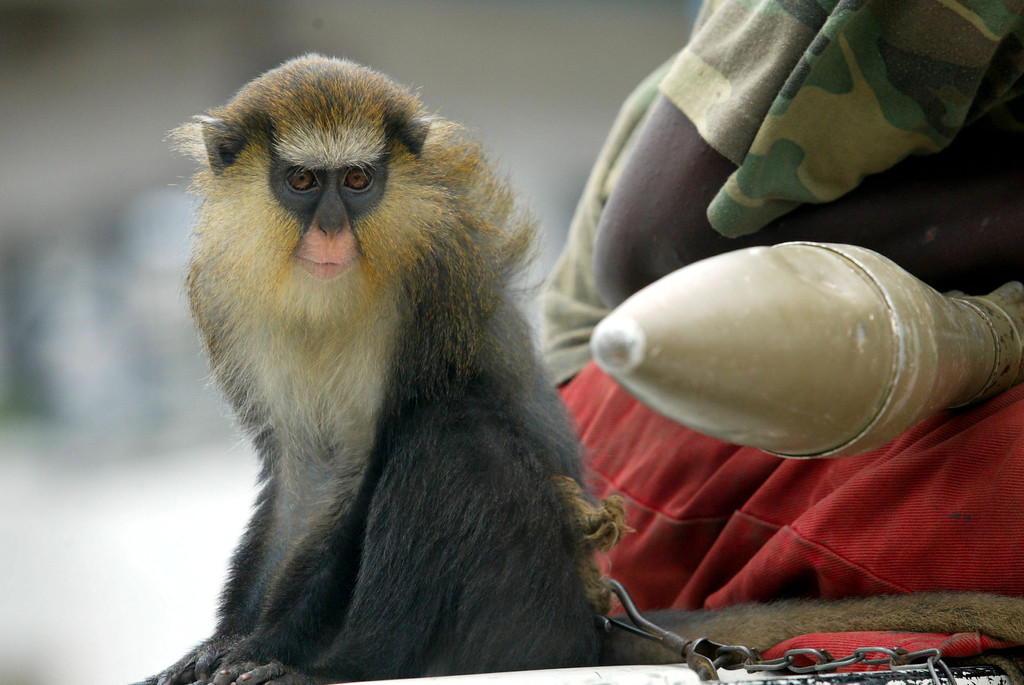 Description of . Rebel fighter patrols with a monkey at back of a truck during a visit by an American convoy from the U.S. embassy in Monrovia, which rolled into rebel territory, Monrovia, August 8, 2003. REUTERS/Juda Ngwenya
