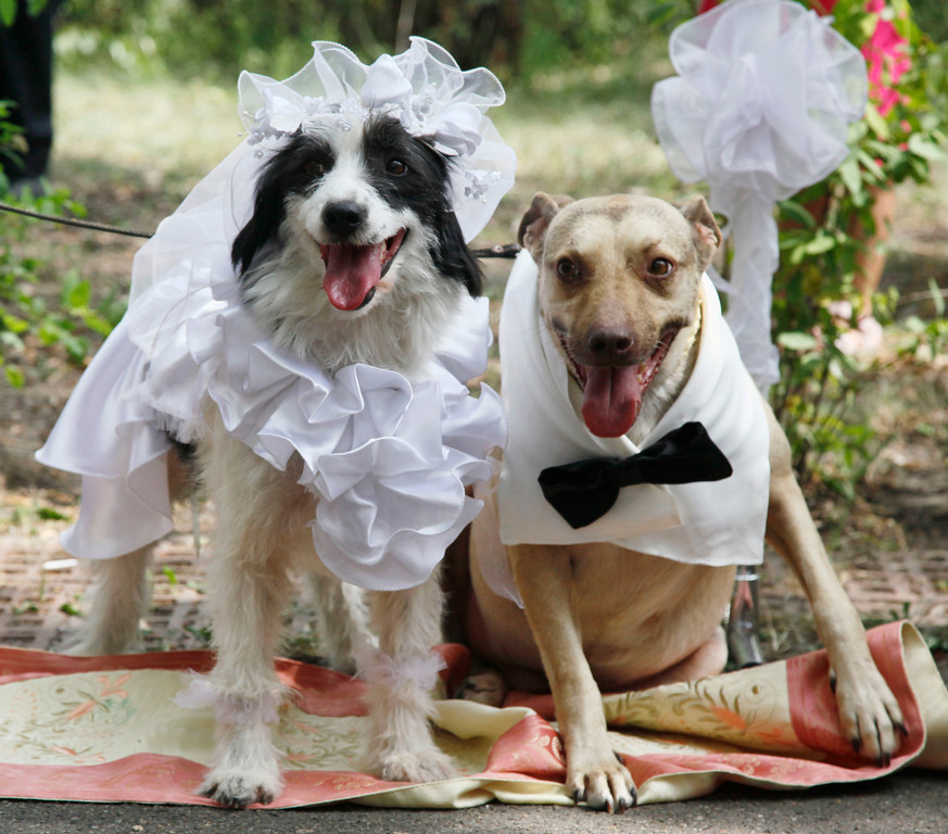 Description of . Homeless dogs Lelya, left, and Hatiko pose during their wedding ceremony in Kiev, Ukraine, Friday, Aug.6, 2010. The ceremony was organized by Ukraine's first ever dogs' wedding agency to attract public attention toward homeless animals. (AP Photo/Efrem Lukatsky)