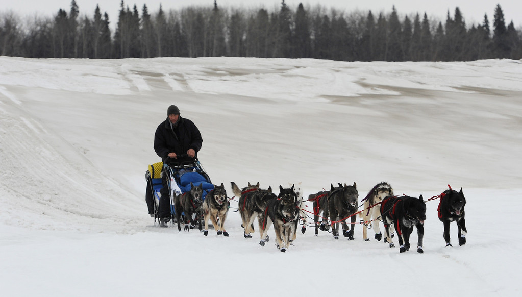 Description of . John Baker drives his dog team up the Yukon River towards the Iditarod checkpoint in  Anvik, Alaska on Friday, March 8, 2013,  during the Iditarod Trail Sled Dog Race. (AP Photo/Anchorage Daily News, Bill Roth)