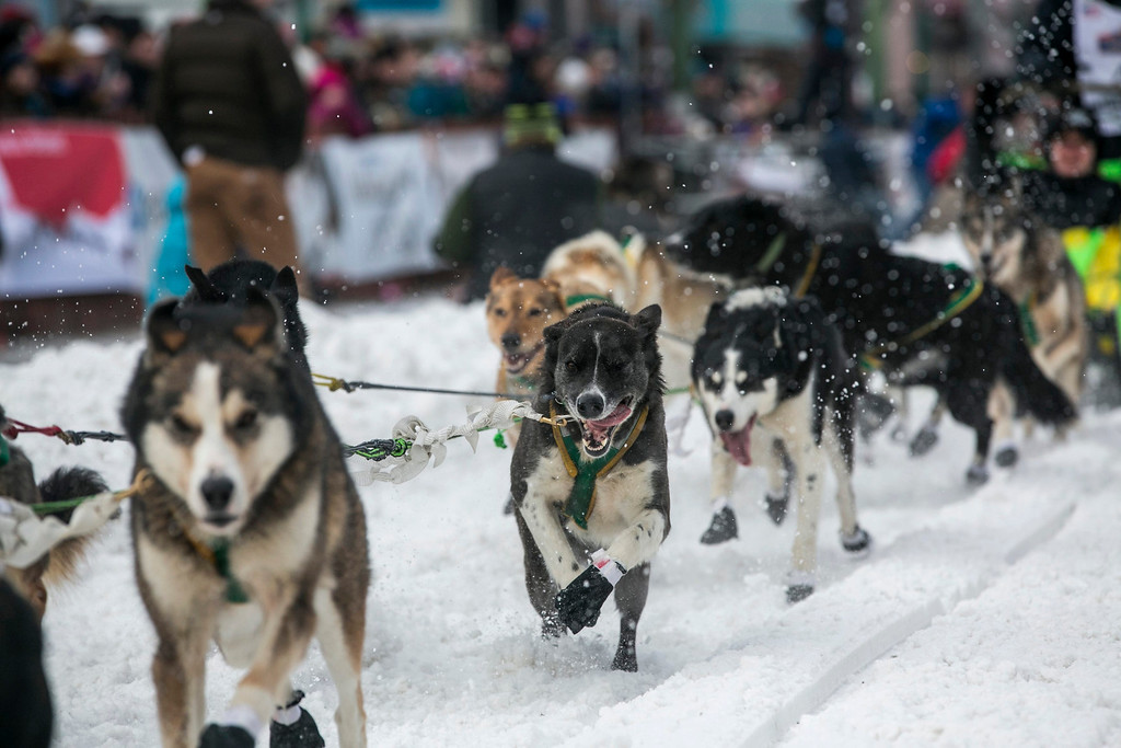 Description of . The dogs of Brazilian musher Luan Ramos Marques charge out of the start gate on 4th Avenue during the ceremonial start to the Iditarod dog sled race in downtown Anchorage, Alaska March 2, 2013.   REUTERS/Nathaniel Wilder